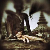 DATE*HUB TRIPPIN' *BANGKOK