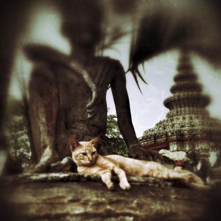 DATE*HUB TRIPPIN' <br />*BANGKOK