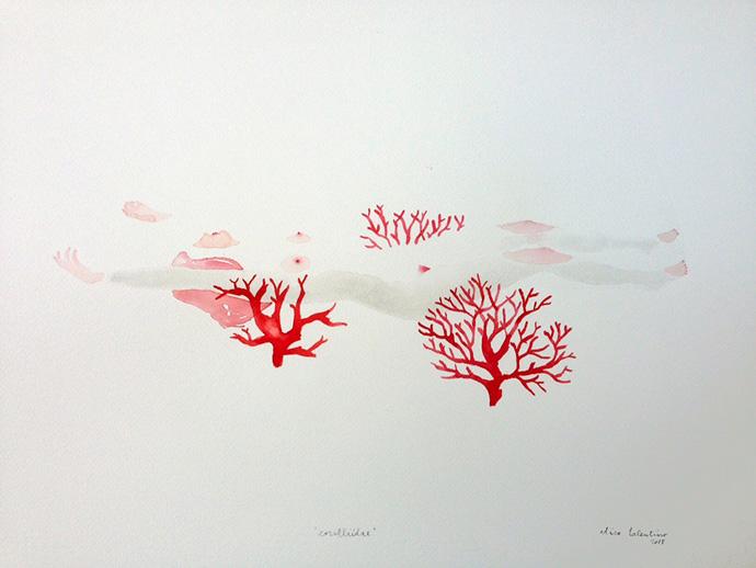 Coralliidae-Elisa-Talentino